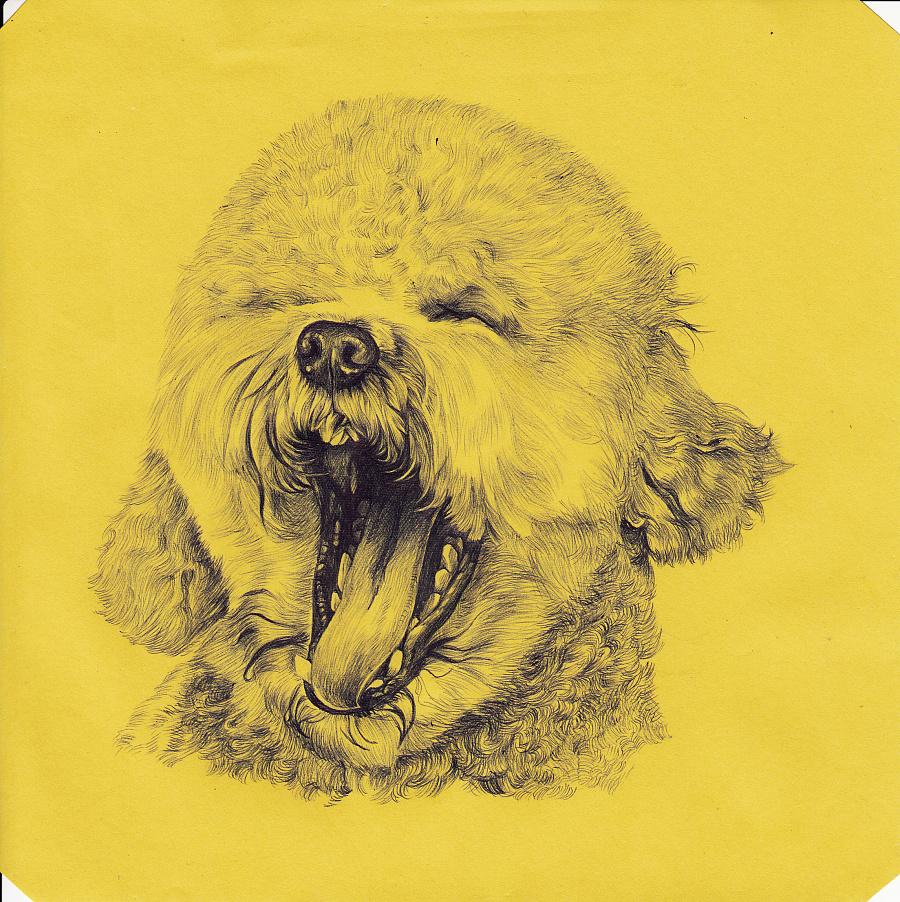 圆珠笔手绘 狗|钢笔画|纯艺术|henry凡