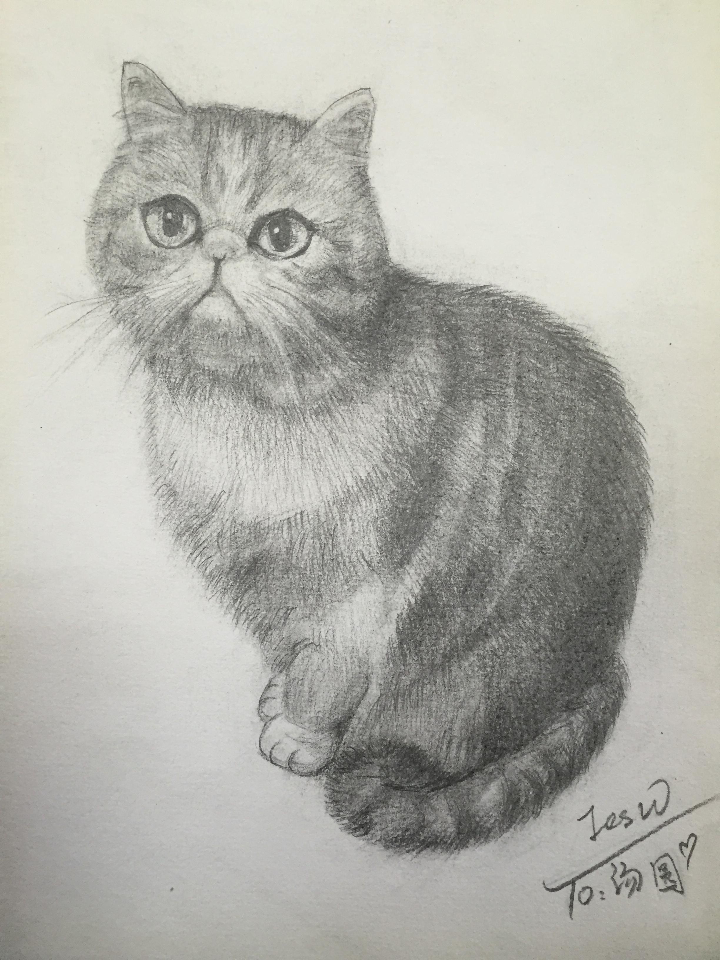 猫-铅笔画【第二弹】