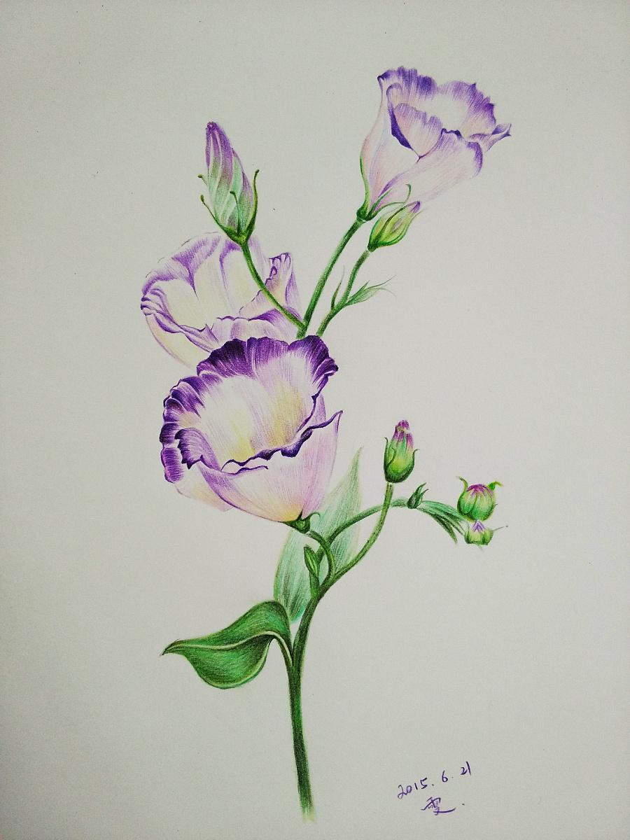 花卉|绘画习作|插画|蚊小盛