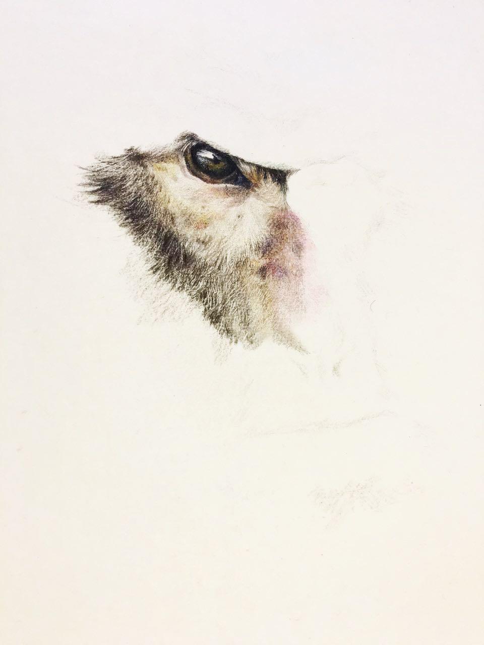 彩铅手绘猴子