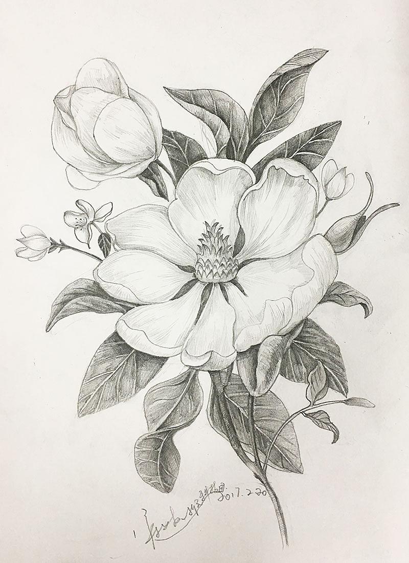 手绘,插画,白描,花,花鸟,国画,中国风元素