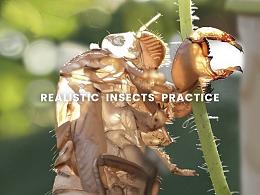 7月 | 写实昆虫练习