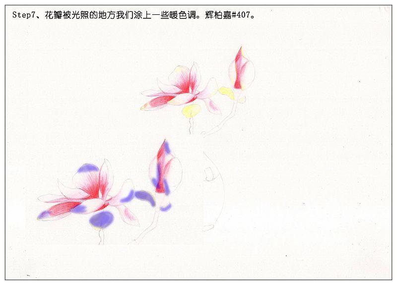 【驴大萌彩铅教程145】手绘日式简约花瓶插花 桃花
