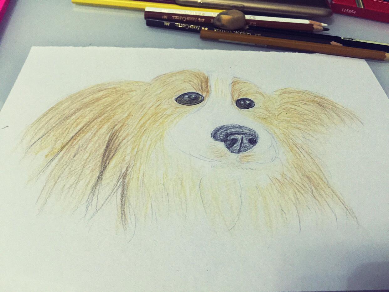 彩铅练习:狗