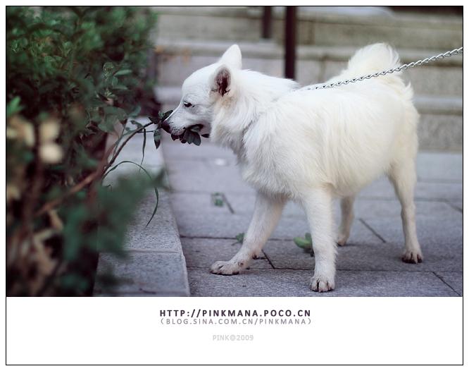炎热夏天的可爱王子lele |宠物/动物|摄影|pinkmana