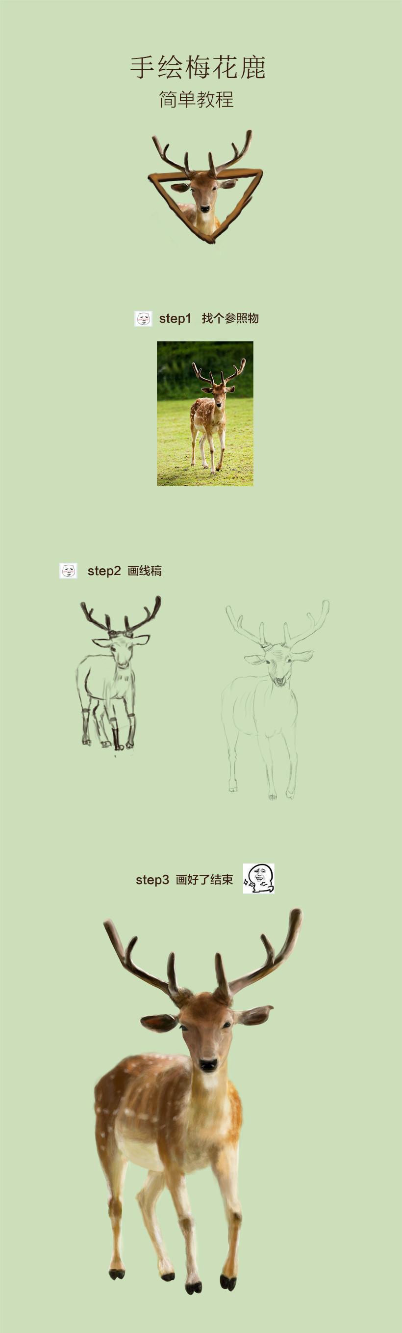 手绘教程-画梅花鹿