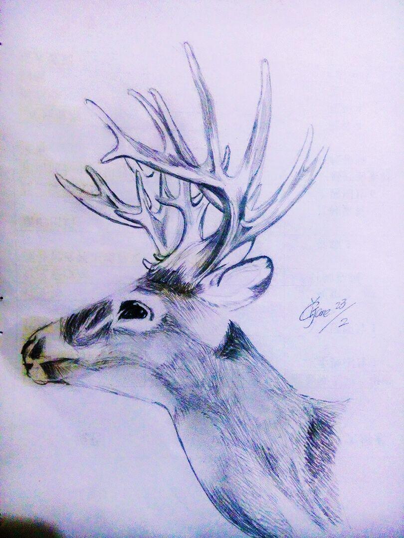 原创作品:铅笔画鹿