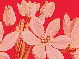 红茶包装插画设计