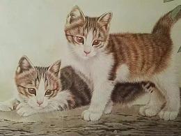 王涛工笔猫最新作品