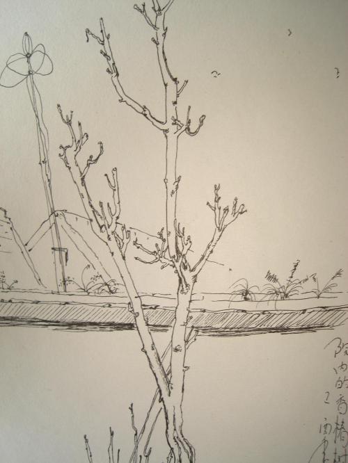 风景速写树枝简单