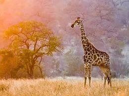 野生动物摄影的意义是什么?西安王老师摄影培训带你走进野生动物