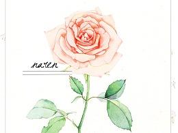 水彩花卉教程—《粉色玫瑰篇》