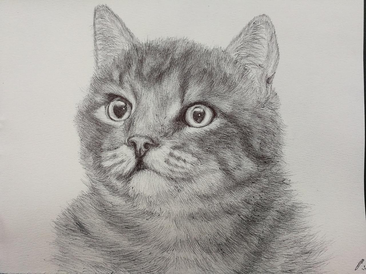 猫(圆珠笔画)