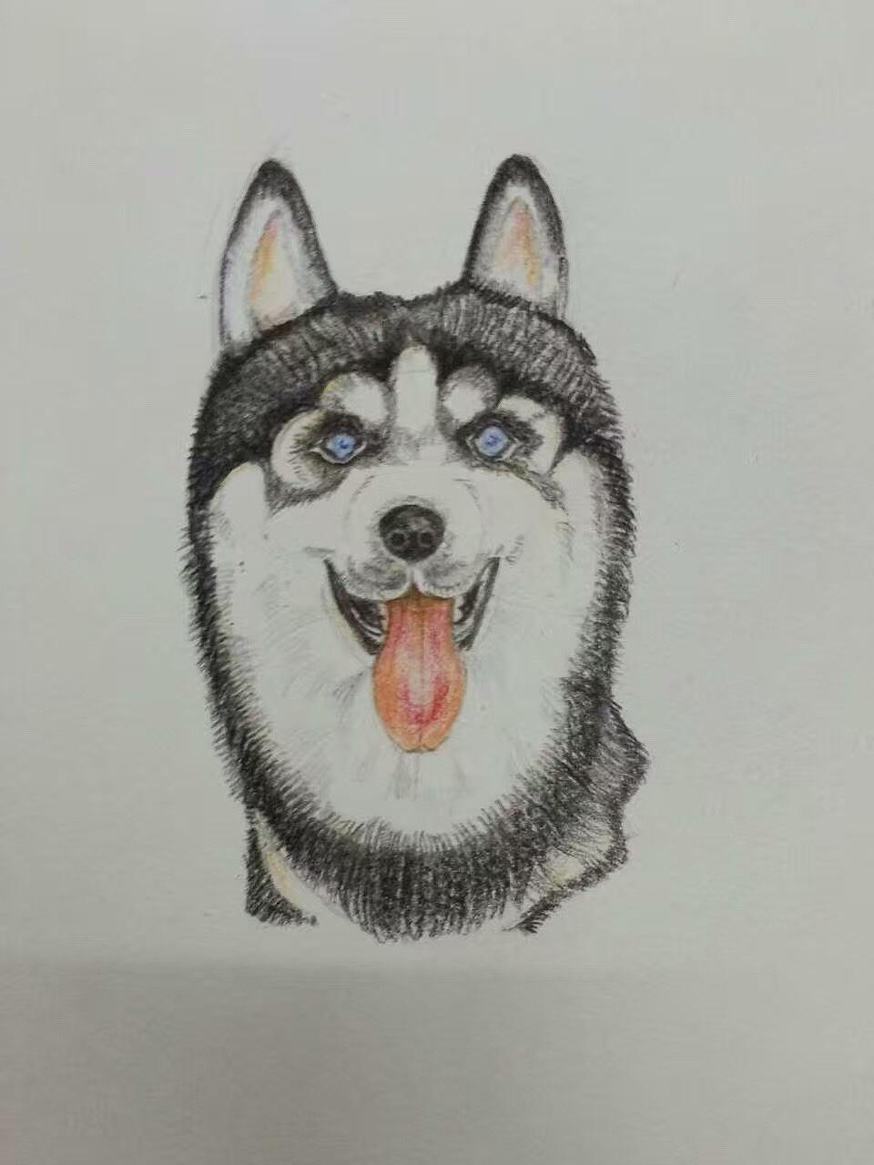 手绘作品|插画|插画习作|柴柴不灵 - 原创作品 - 站酷