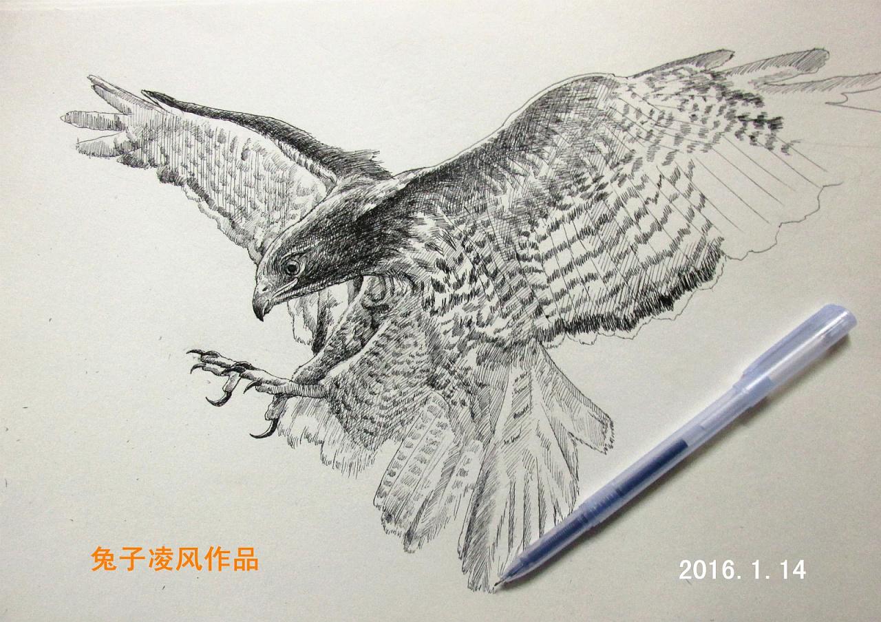 兔子素描-中性笔画老鹰
