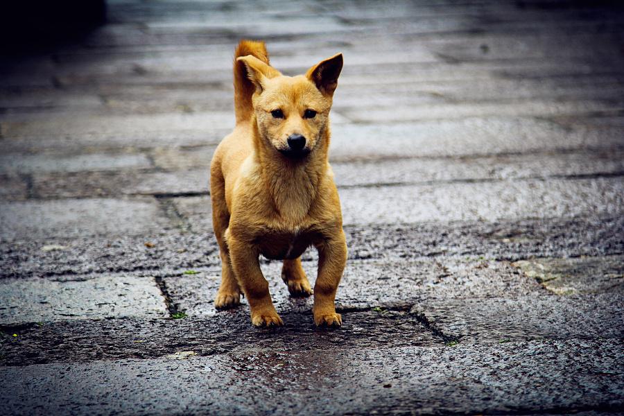 可爱的小土狗看到了我飞奔过来