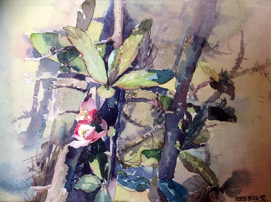 类似联想_后院的酸木瓜开花了,有点类似苹果花,它让我联想到娇滴滴的小姑娘.