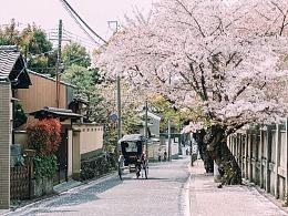 京都.樱花飘落