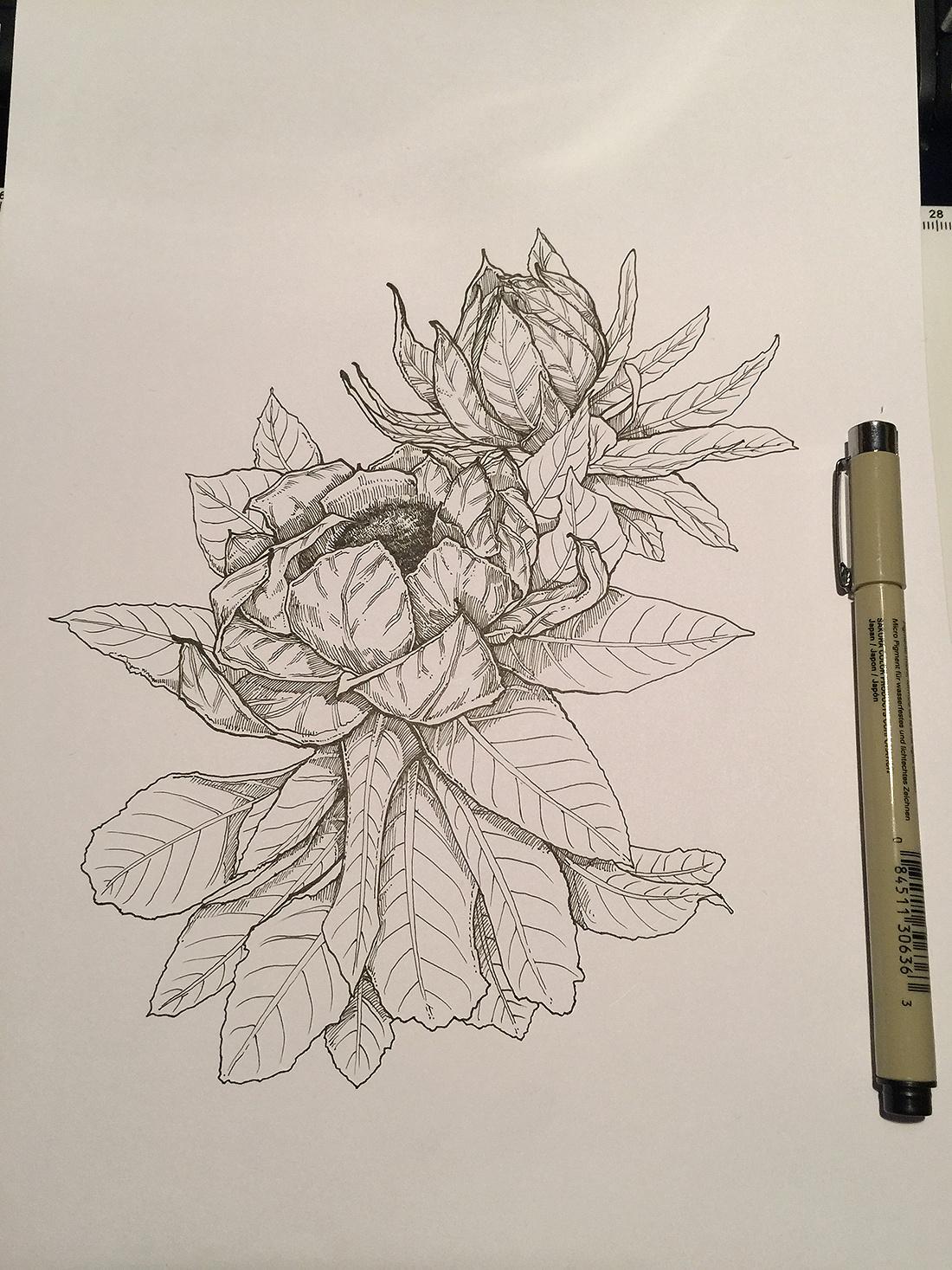 手绘插图—雪莲