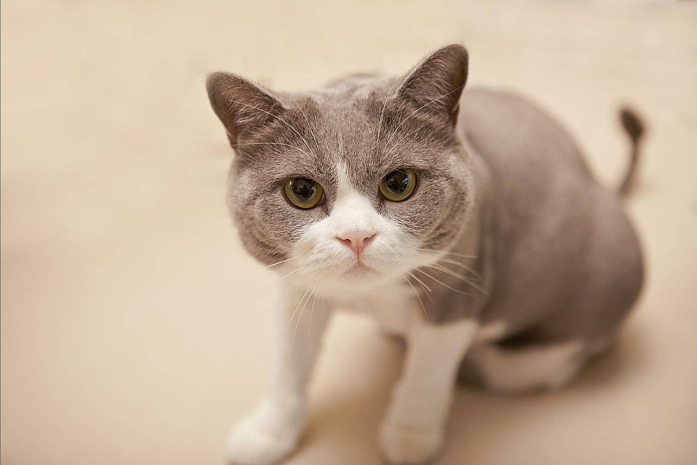 壁纸 动物 猫 猫咪 小猫 桌面 1430_954