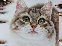 手绘-彩铅-猫猫
