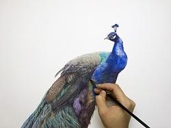 蓝孔雀-纪梵水彩作品