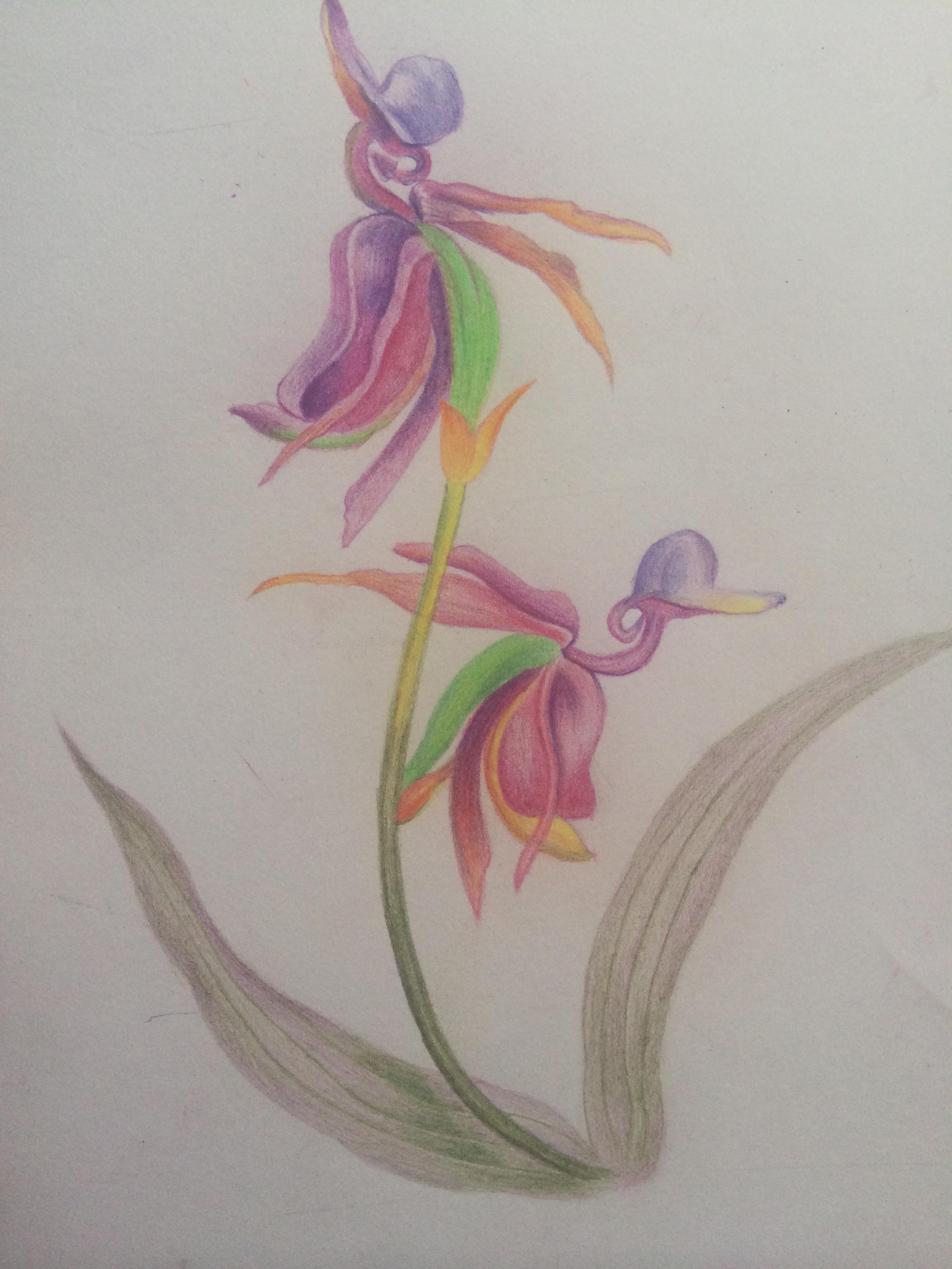 彩铅手绘花卉|插画|插画习作|ui_yoyo - 原创作品