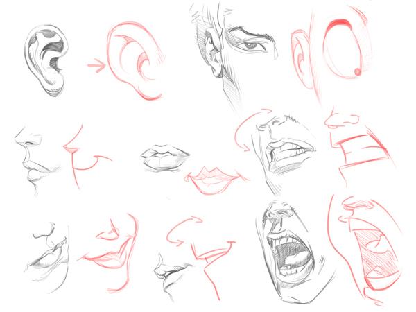 【动画入门教程】如何画好卡通人物的脸