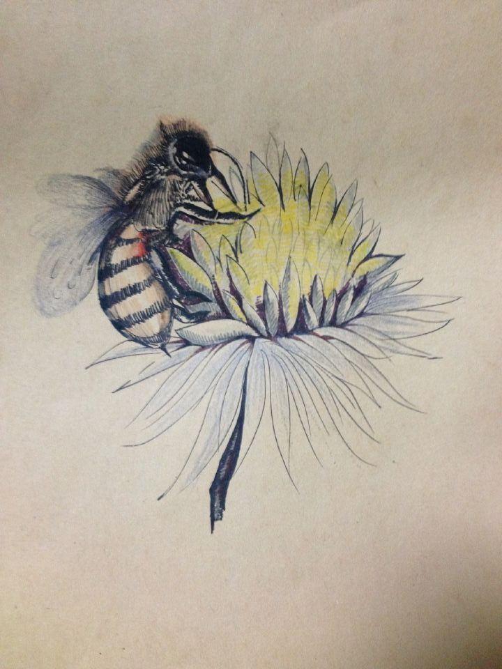 蜜蜂手绘教程