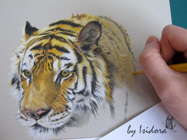 教程:tiger 彩铅手绘过程(原创文章)