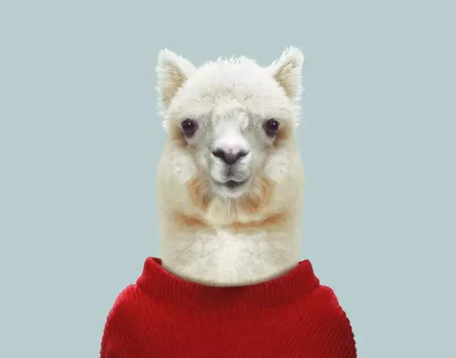 动物穿上衣服都比你帅!这是一个残酷的现实