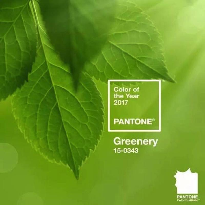 背景 壁纸 绿色 绿叶 树叶 植物 桌面 800_800图片