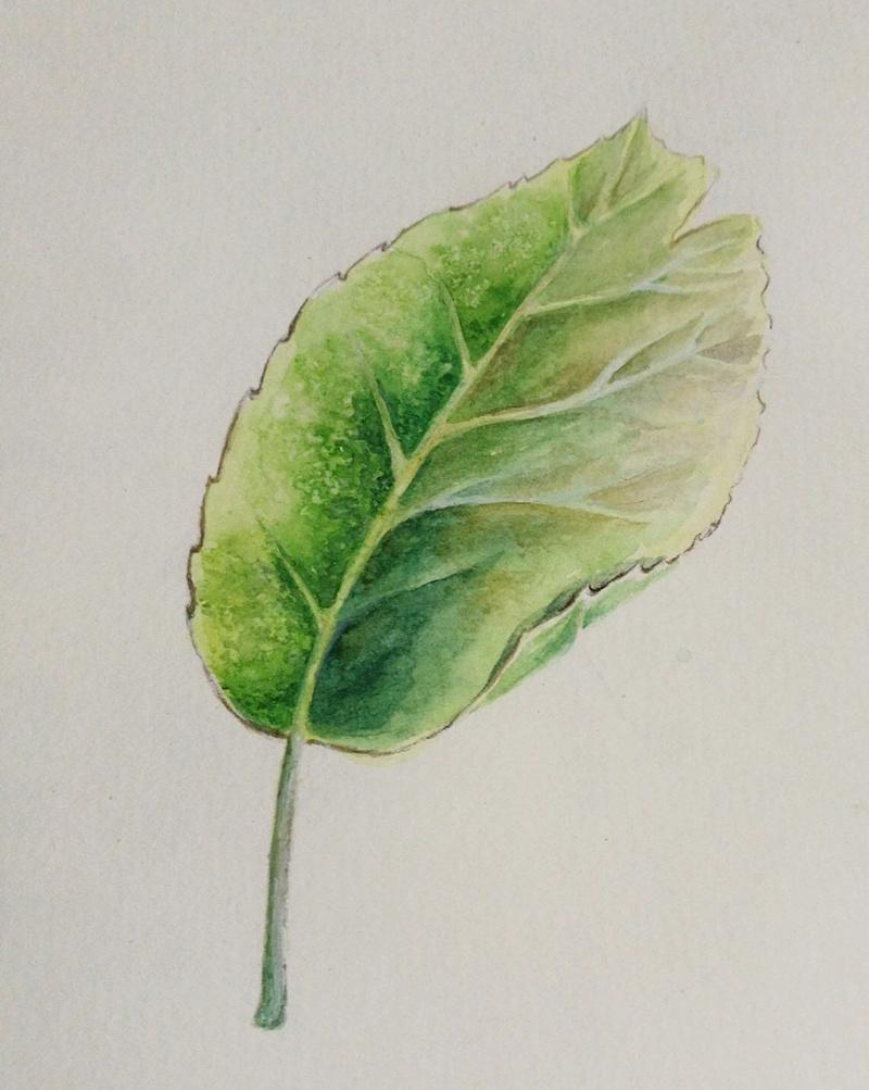 油画树叶的画法视频_素描树叶画法步骤图片_油画中树叶的画法视频图片