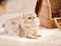 吃仙气长大的猫猫