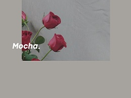 摄影……玫瑰