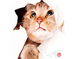可爱的喵喵