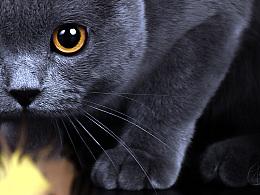 Onescat-克查原创作品【1】英国短毛猫-丸子