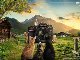 猫咪全家福--美好的瞬间由你演绎
