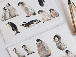 水彩企鹅绘画过程