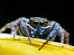 两种蚂蚁+蜘蛛(微距 )