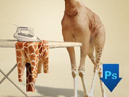 PS习作整理(提供长颈鹿脱皮源文件和素材)