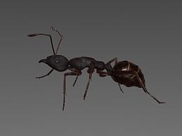 C4D 蚂蚁动画