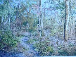 《日光森林》