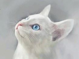 一只小白猫