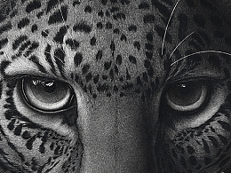 南山兽,多猛豹