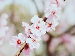 呐,你知道吗樱花下落的速度是每秒五厘米。