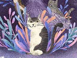 猫萝星主视觉插图