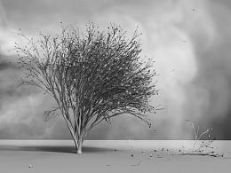 测试_风吹树