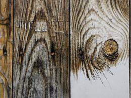 彩铅的魅力-《生命的纹理》