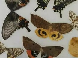动植物标本